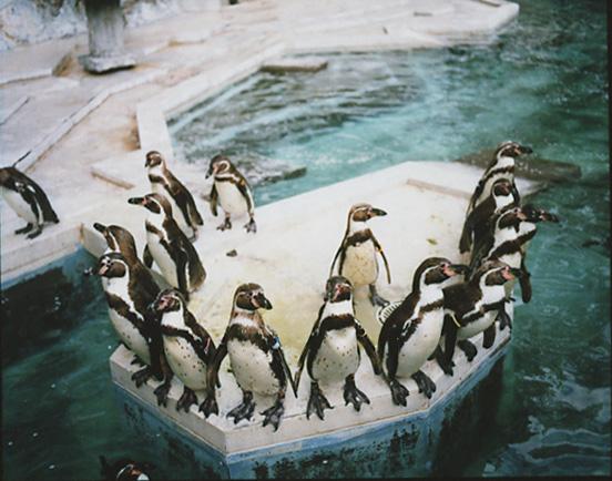 pentax6x7_kodak_ektar100_penguin